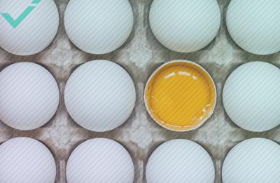L'équipe Norvégienne se retrouve avec 15000 œufs à Cause d'une erreur de traduction